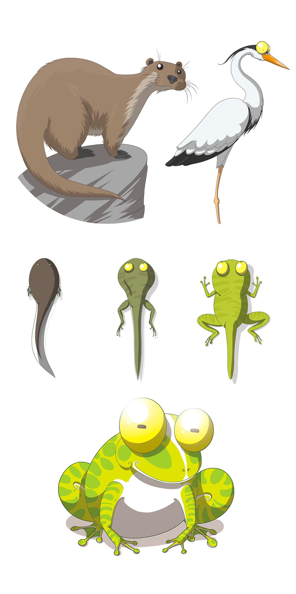 dessins jeunesses animaux de la mare